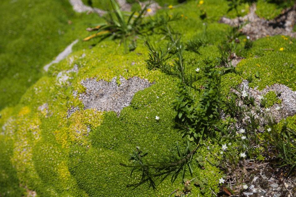 regne_vegetal2